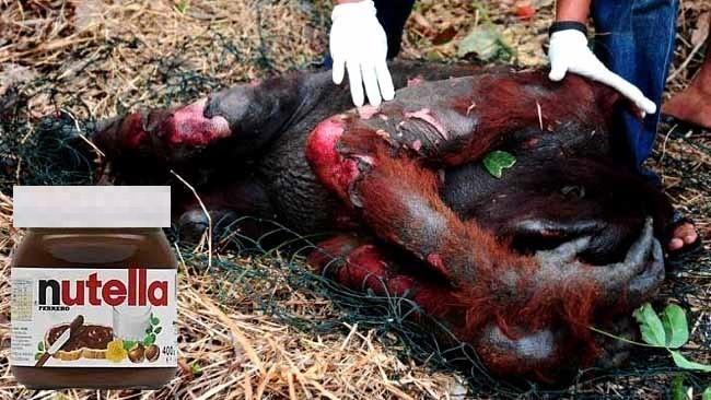 Nutella Palm Yağı İçin Orangutanları Öldürüyor